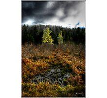 Storm Darkens a Larch Bog Photographic Print