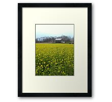 Wild Yellow Mustard in Meadow with Barn Framed Print