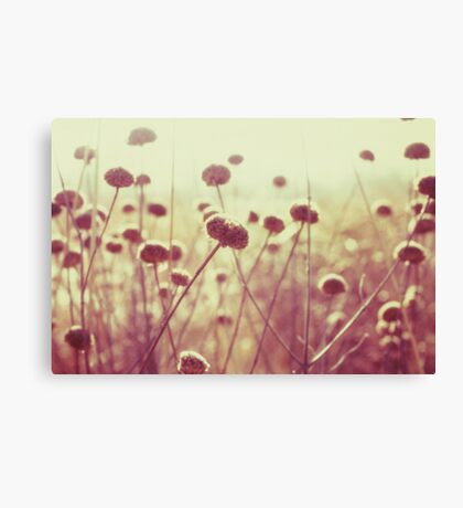 field of light II Canvas Print