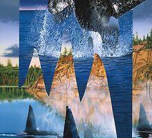 Orca reflection by Graeme  Stevenson