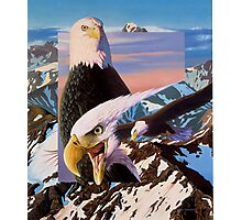 screaming eagles Photographic Print