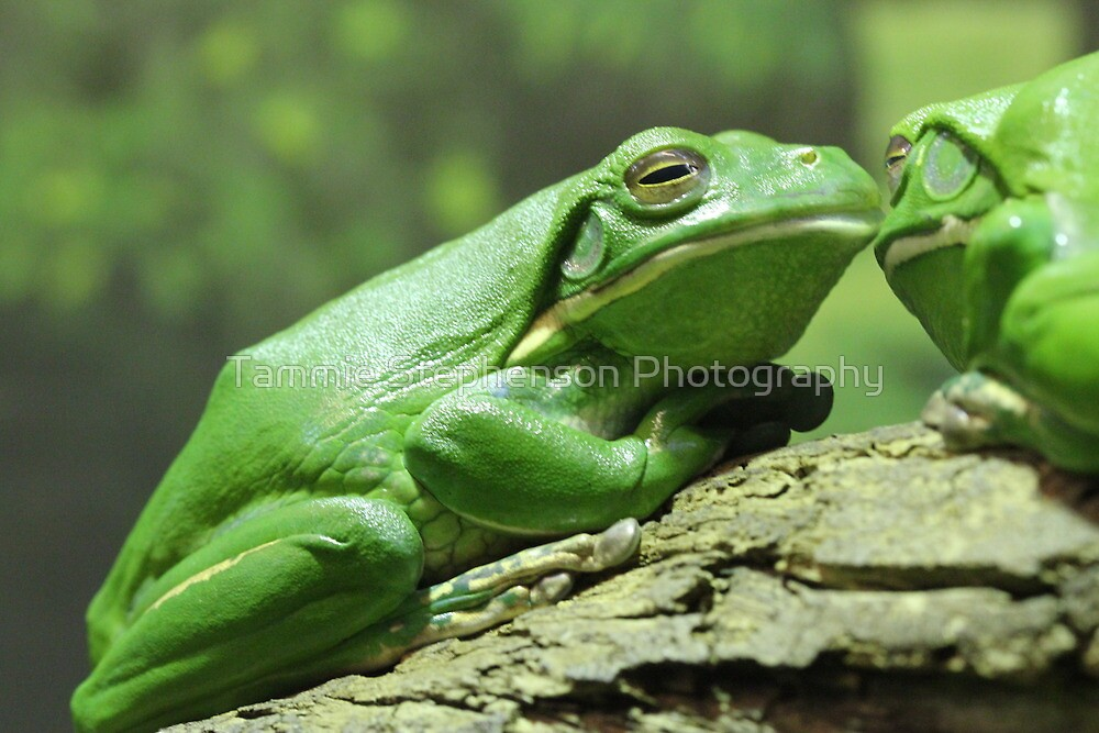 Kermit the Frog by Tammie Stephenson Photography