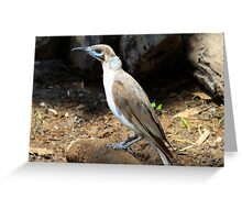 Blue faced honey eater? Greeting Card