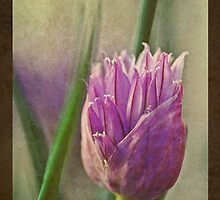 Flowering Chive by Keri Harrish