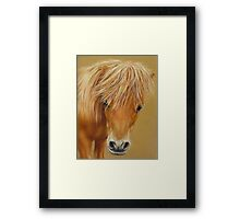 Miniature Pony Colt Framed Print