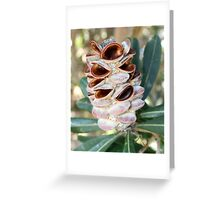 Coastal Banksia at Lennox Head NSW Greeting Card