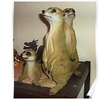 A gift for Christmas - Meerkats Poster