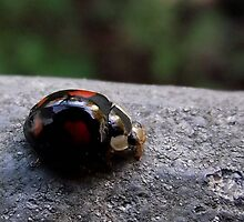 Ladybird by SophiaDeLuna