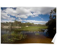 Dunn's Swamp ~ Wollemi National Park I Poster