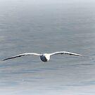 Freedoms Wings by Louise Linossi Telfer