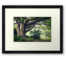 Camphor laurel tree, Yarramalong School Framed Print