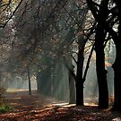 May there be beautiful light on all your paths in 2012 by jchanders