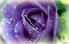Purple Rain by naturelover