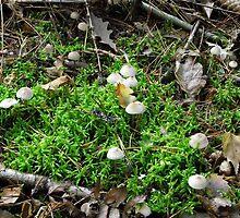 Mushrooms and Moss by SophiaDeLuna