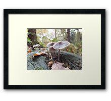 Open Bell Cap Fungi Framed Print