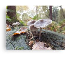Open Bell Cap Fungi Canvas Print