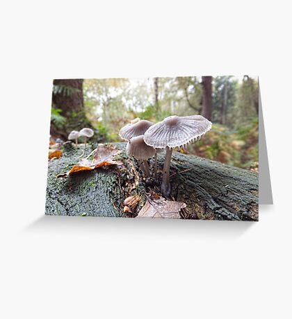 Open Bell Cap Fungi Greeting Card