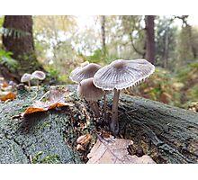 Open Bell Cap Fungi Photographic Print