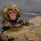 Monkey Magic #2 by Mark Elshout