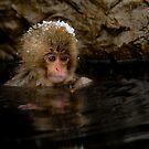 Monkey Magic #4 by Mark Elshout