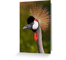 Grey Crowned Crane (Balearica regulorum) Greeting Card