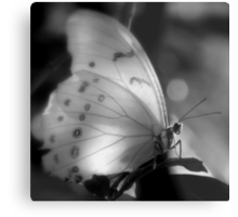 Who Needs Colors For Beauty ~ Part One Metal Print