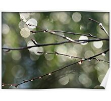 Dewdrops and Bokeh Poster