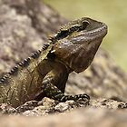 Waterdragon by Infinipix