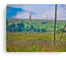 Crazing cows Canvas Print