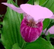 Pink Ladyslipper by Larry Trupp