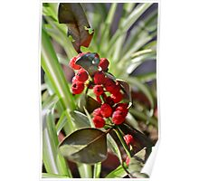 Withered Berries in the Morning Light Poster