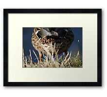 Behind the duck Framed Print