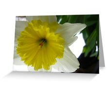 Daffodil horn Greeting Card