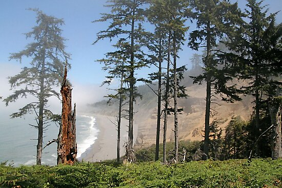 Looking out to Agate Beach by Trish Peach