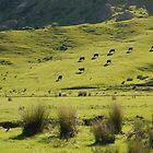 New Zealand farm land by nzpixconz