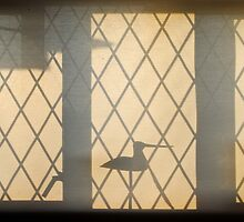 Early morning window by richard  webb