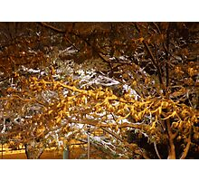 snowy night scene Photographic Print