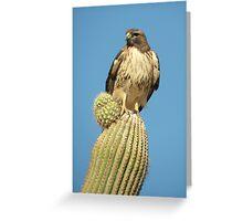 Red-tailed Hawk ~ Saguaro Sitting Greeting Card