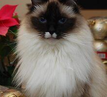 Murphy is my Christmas helper by Marjorie Wallace
