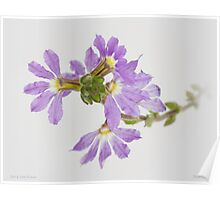 Fairy Fan-flower Poster