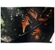 Backlit Autumn Leaves Poster
