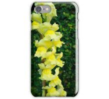 Yellow Bells* iPhone Case/Skin