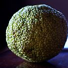 Hedge Apple, Maclura pomifera. by Billlee