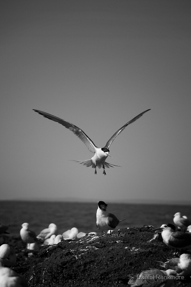 Coming in to land. by Daniel Rankmore