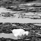 Newcastle Beach Gull by Daniel Rankmore