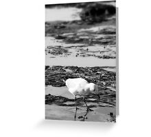Newcastle Beach Gull Greeting Card