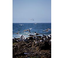 Birds over Newcastle Baths Photographic Print