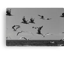 Flight Over Newcastle Baths Canvas Print