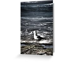 Newcastle Beach Gull & Surfers Greeting Card