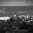 Gulls' Landing by Daniel Rankmore